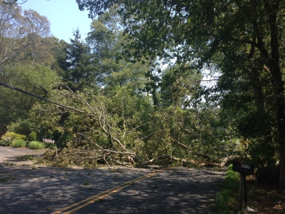 Trees down on Greenhaven Road in Stonington
